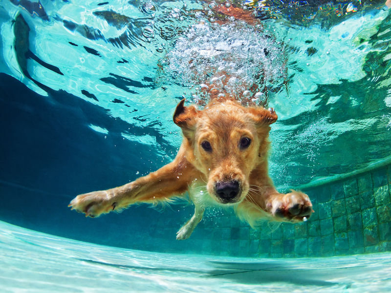 Dog jumping into water to demonstrate how hearing aids can get wet easily when you're having fun this summer because moisture damages hearing aids.