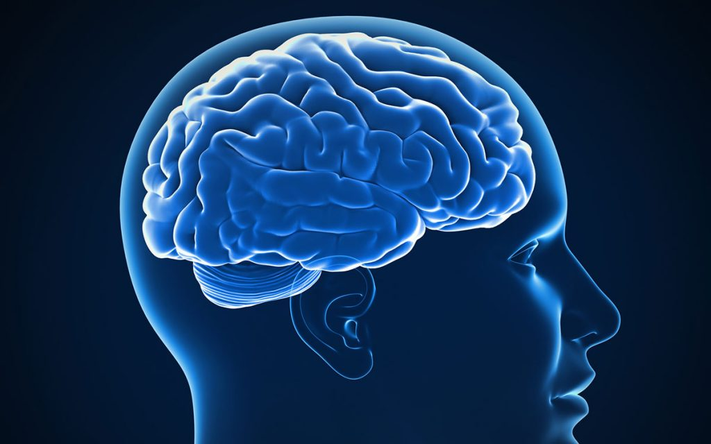 The brain and the effects that Tinnitus has on the brain.
